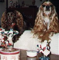 cocker spaniel,10,700 bytes